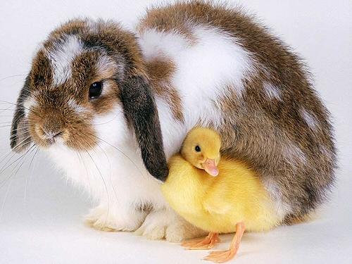 Állatbarát Húsvét, élő füles nélkül