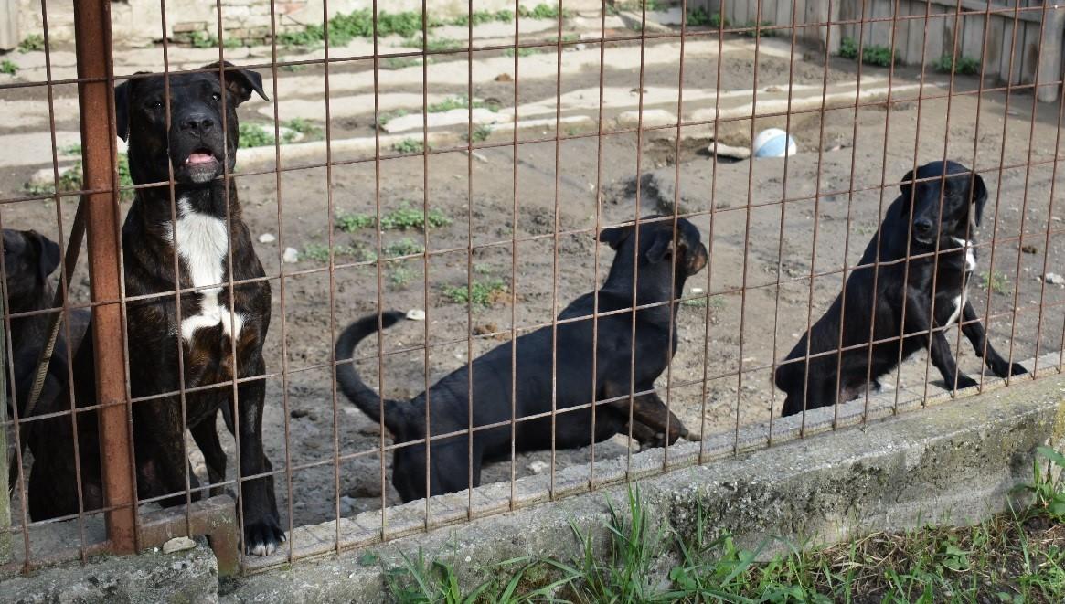 Állatmenhely - kutyák a rácsok mögött