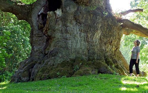 Madarak és fák napja – 2020. május 10.